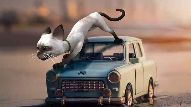 Cerita Lucu Anak-Anak - Kucing